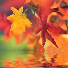 feuilles-automne